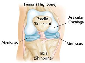 Arthritis_Anatomy
