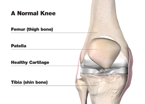 normal_knee_w